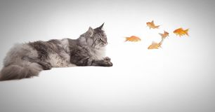 Cat watching fish. Digital composite of Cat watching fish Royalty Free Stock Photography