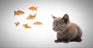 Kitten watching fish. Digital composite of Kitten watching fish Stock Images