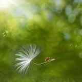 Natural Adventure. Digital composite of a ladybird riding on a dandelion seed Royalty Free Stock Images