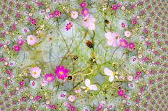 Digital design with pink daisy Royalty Free Stock Photography