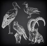 Digital drawing of stork, falcon, goose  and  goat Stock Photos