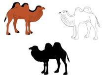 Digital drawing of three camels royalty free illustration