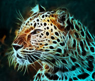 Digital drawing of a tiger Royalty Free Stock Photo
