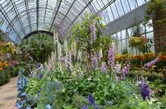 A digital floresce a flor Fotografia de Stock