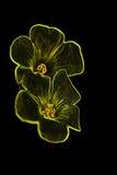 Digital flower 4 Stock Photos