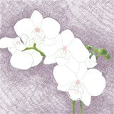 Digital hand drawn illustration of a beautiful white orchid bran. Ch, on a purple crosshatch background stock illustration