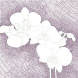 Digital hand drawn illustration of a beautiful white orchid bran. Ch, on a purple crosshatch background vector illustration
