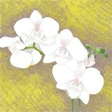 Digital hand drawn illustration of a beautiful white orchid bran. Ch, on a purple and yellow crosshatch background stock illustration