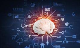 Digital human brain royalty free illustration