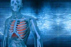 Digital illustration 3dman. Digital illustration 3d man anatomy stock images