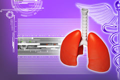 Digital illustration of lungs Stock Image