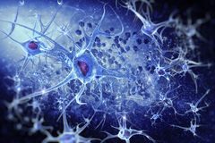 Digital illustration neurons. Neurons and Nucleus (Structure of the brain Royalty Free Stock Photo