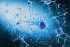 Digital illustration neurons. Neurons and Nucleus (Structure of the brain Royalty Free Stock Images