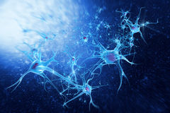 Digital illustration neurons. Neurons and Nucleus (Structure of the brain Royalty Free Stock Image