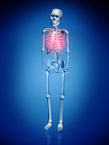 Digital illustration of a Skelton Stock Image