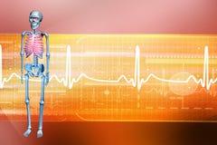 Digital illustration of a Skelton Stock Images