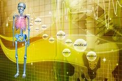 Digital illustration of a Skelton Royalty Free Stock Image