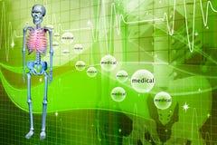 Digital illustration of a Skelton Stock Image