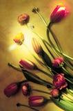 Digital konstmålning - som är färgrik på grönt tulipan Royaltyfria Bilder