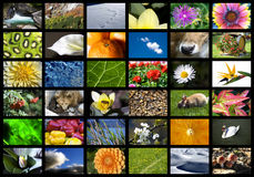 Digital nature. A wall of multiple screens for digital television with nature theme royalty free stock photography