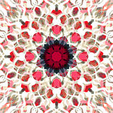 Digital Painting Beautiful Abstract Colorful Floral Mandala Background Stock Photos