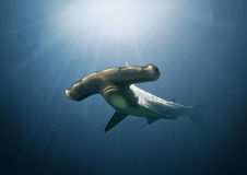 Hammerhead Shark Painting Stock Images