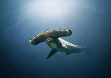 Hammerhead Shark Painting. A digital painting of a deep water hammer head shark Stock Images