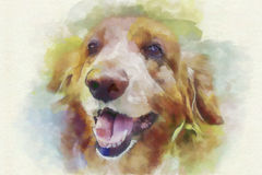 Digital painting dog portrait Royalty Free Stock Photography
