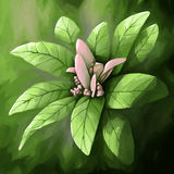 Digital painting flower leaf pink Stock Photography