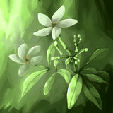 Digital painting flower leaf white Stock Photos