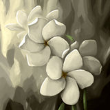 Digital painting flower white pale Royalty Free Stock Image