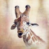 Giraffe head digital painting. Digital painting of giraffe portrait vector illustration
