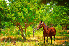 Digital painting of a  horse out grazing in a field Stock Photo