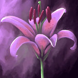 Digital panting flower lily purple Stock Photo