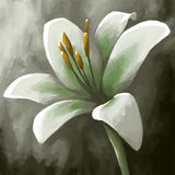 Digital panting flower lily white Royalty Free Stock Photography