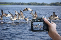 Digital photo camera. Digital camera  is in the hand of man Stock Images