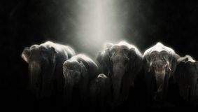 Digital photo manipulation of elephants in Sri Lanka Royalty Free Stock Photo