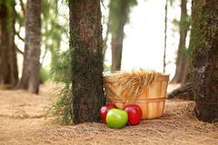 Digital Photography Background Of Fall Basket In Forrest. Digital background of fall wooden basket prop with apples in forrest for use with newborn, baby or stock photos
