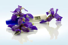 Digital Pregnancy Test. With flowers royalty free stock photography