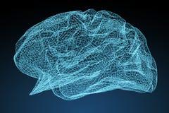 Digital x-ray human brain 3D rendering Stock Photography
