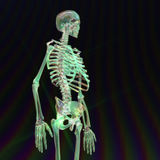 Digital Rendering of a human Skeleton Royalty Free Stock Images
