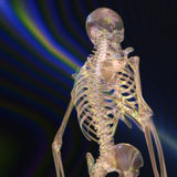 Digital Rendering of a human Skeleton Stock Photography