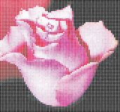 Digital rose Stock Images