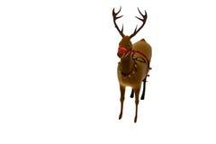 Digital santas reindeer with bells Royalty Free Stock Image