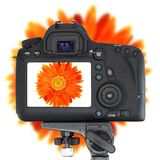 Digital SLR Camera Royalty Free Stock Photos
