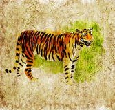 Digital tiger. Digital watercolor illustration of a tiger Royalty Free Stock Photography