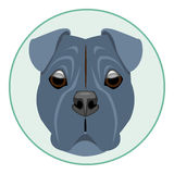 Digital vector boxer dog face Royalty Free Stock Photography