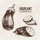 Digital vector detailed line art eggplant Royalty Free Stock Photography