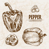Digital vector detailed line art pepper vegetable Royalty Free Stock Photography