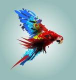 Digital vector illustration flying ara Stock Photos